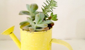 Frugal Friday Fun: Planting a Miniature Succulents Garden