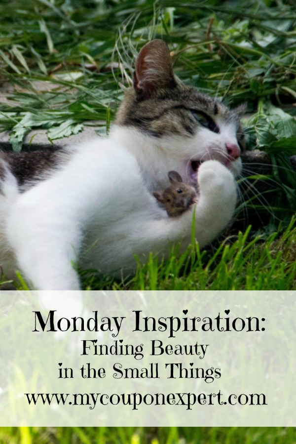Monday Inspiration: Finding Beauty in the Small Things
