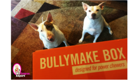 Rosco and Baby Girl got their Bullymake Box!  $10 off Code too!